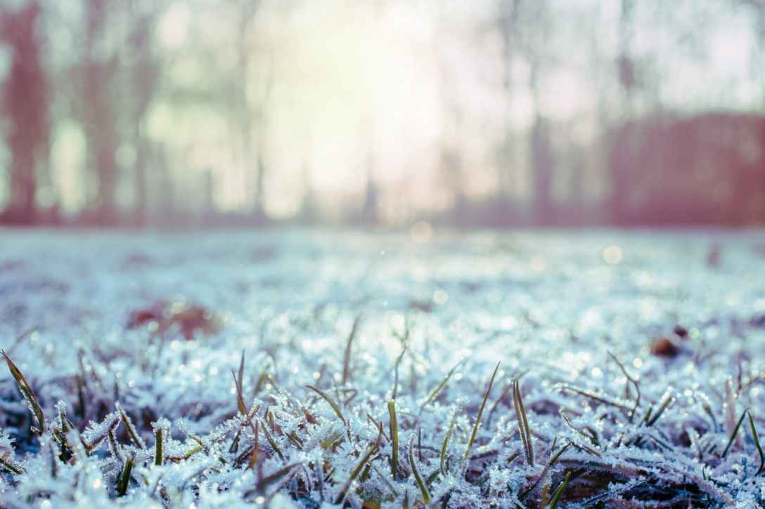 green grass covered with snow